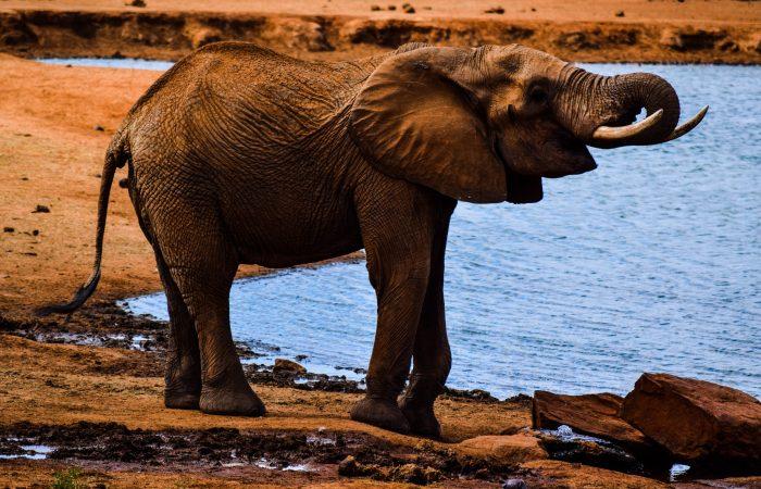 Do Elephants Forget?