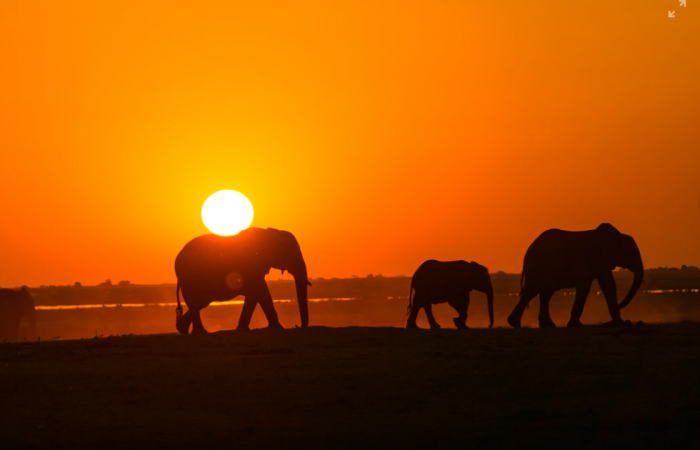 Why Elephants Make the Ultimate Sales Professional!