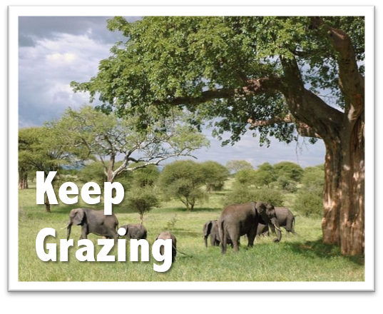 Keep Grazing